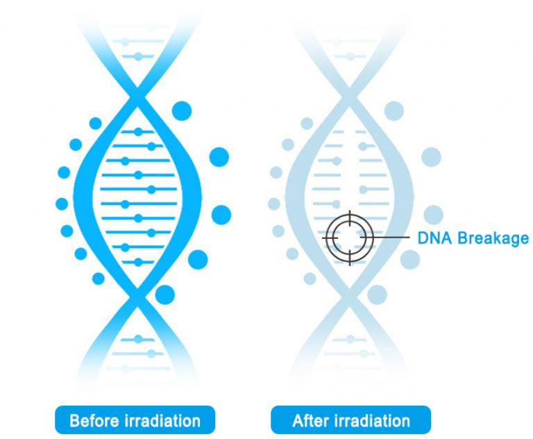Principle of UV Sterilization